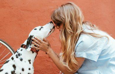 help een adapotiehond aan een huis