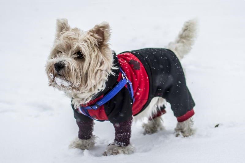 hond met winterjas