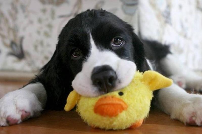je-hond-leren-speeltjes-opruimen